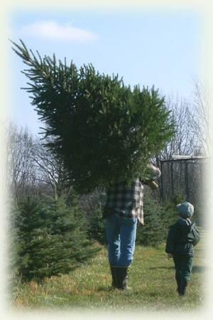 A cut tree